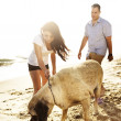 Couple playing with pet dog. — Stock Photo