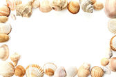 Frame of conch sea shells — Foto de Stock