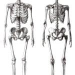 Drawing skeleton — Stock Photo