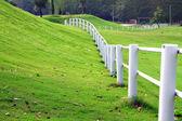 Vitt staket — Stockfoto