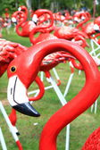 Flamants roses rouges — Photo