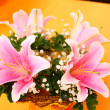 Lilly flowers — Stock Photo