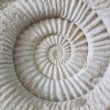 Stock Photo: Ammonite prehistoric fossil