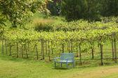 A single sky-blue wooden bench — Stock Photo