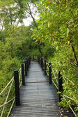 Wooden bridge in mangrove forest — Stock Photo
