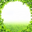 Stock Photo: Green leaf circle shape isolated