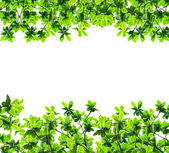 Green leaf isolated over white — Stock Photo