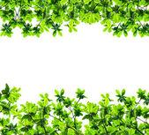 Foglia verde isolato sopra bianco — Foto Stock