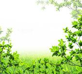 Hoja verde aislada — Foto de Stock