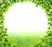 Green leaf circle shape isolated — Stok fotoğraf