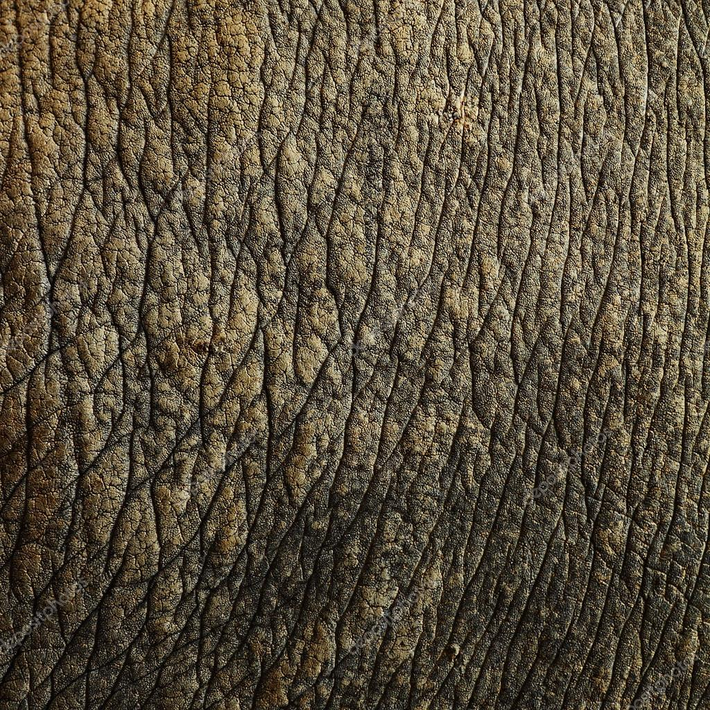 Rhino skin textures — Stock Photo © kongsky #39737387