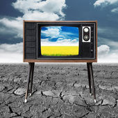 Vintage television with rice seedlings germinated eco friendly c — Stock Photo