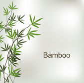 Branch of bamboo — Stock Vector