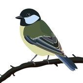 Tit bird — Stock Vector
