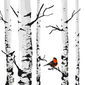 Bird of birches — Stock Vector