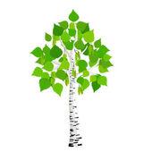 Vector birch tree — Stock Vector