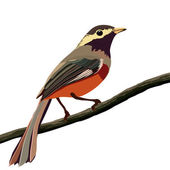 Bird on a branch — Vector de stock