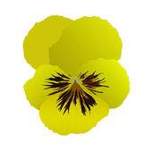 Heartsease flower in vector — Stock Vector