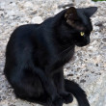 Постер, плакат: Черный кот