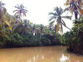 Каналы Кералы (Ковалам, Индия) - Kerala Backwaters (Kovalam, India) — Fotografia Stock