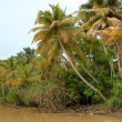 Kerala backwaters. Kerala, India — Stock Photo