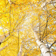 Autumn trees with yellowing leaves against the sky — Foto Stock