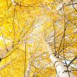 herfst bomen met vergeling bladeren tegen de hemel — Stockfoto