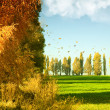 Autumn landscape with green wheat field and yellow woods — Stock Photo