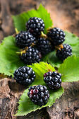 Ripe blackberries on bark in the forest — Stock Photo