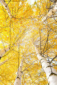 Autumn trees with yellowing leaves against the sky — Stock Photo