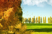 Podzimní krajina s zelenou pšeničné pole a žluté woods — Stock fotografie