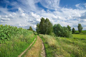 Country landscape with fields, road, trees and beautiful cloudy sky — Stock Photo