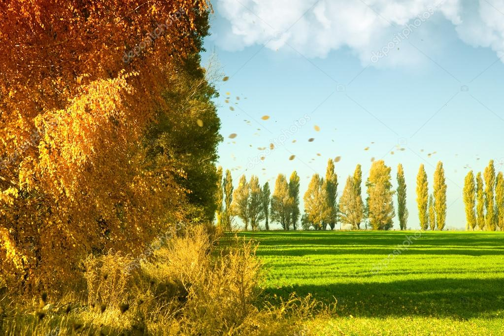 Autumn landscape with green wheat field and yellow woods — Stock Photo #12672019