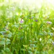 Photo: Meadow with wildflowers. Nature abstract background