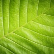 Green leaf closeup background — Stock Photo