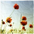 Stock Photo: Poppies bloom in meadow with textured vintage paper effect