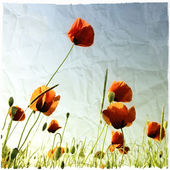 Poppies bloom in the meadow with textured vintage paper effect — Stock Photo