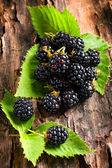 Blackberry on bark background — Stock Photo