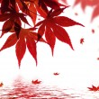 A beautiful red maple branch reflected in water with falling leaves in a pond — 图库照片