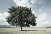 Stylized landscape with a tree in the meadow, can be used as background for design — Stock Photo