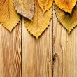 Autumn background. Leaves border on wood — Stock Photo #13374429