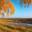 Autumn rural scenery — Stock Photo