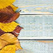 Φθινοπωρινά φύλλα στο shabby εκλεκτής ποιότητας ξύλο — 图库照片