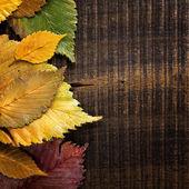 Autumn background. Leaves border on dark wood — Stock Photo