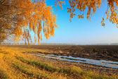 осенние сельских пейзажей — Стоковое фото