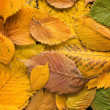 Autumn leaves background — Stock Photo #13556976