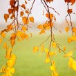 Abstract autumn background — Stock Photo