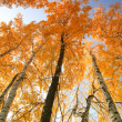 Autumn trees with yellowing leaves against the sky — 图库照片