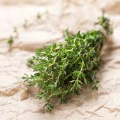Thyme herb — Stock Photo