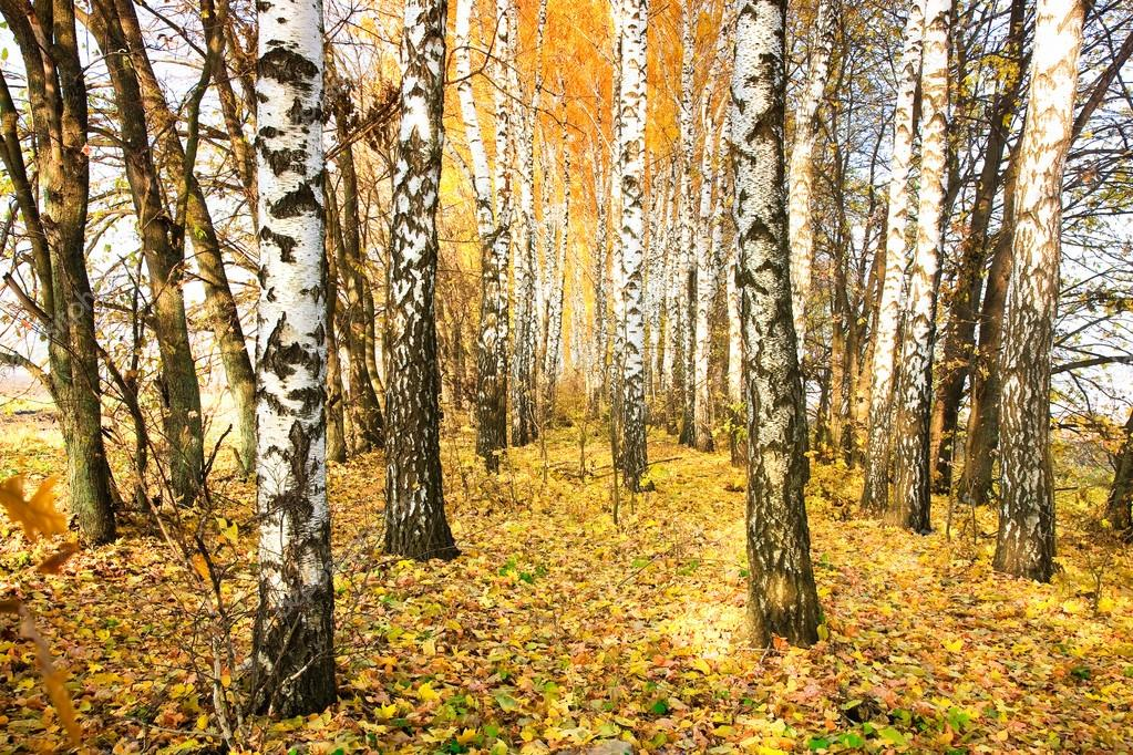 Autumn trees — 图库照片 #13558366